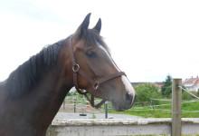 Ny «gammel» hest