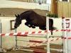 flying-dutchessimg_8492